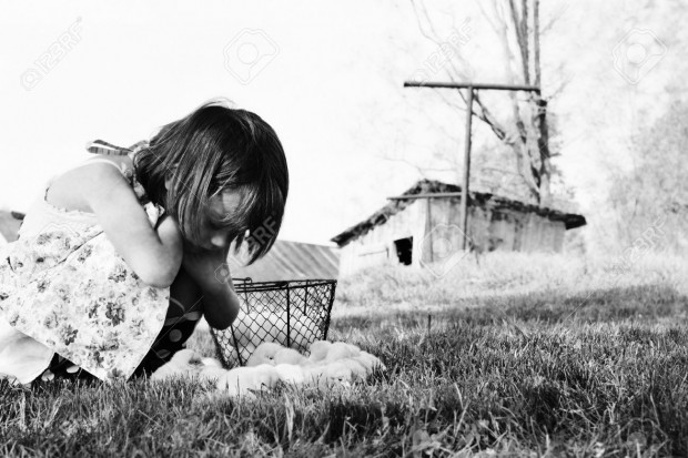 13027962-Little-girl-watching-Buff-Orpington-chicks-with-chicken-coop-and-barn-in-far-background-Extreme-shal-Stock-Photo
